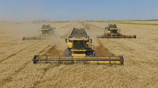 Búza aratás 2017 / Big Wheat Harvest 2017 - 4x New Holland CR9090 + 8x John Deere Transport