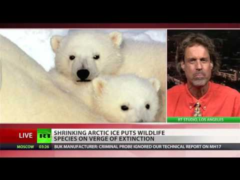 'We're in deep trouble' Disappearing sea ice dooms seals & polar bears
