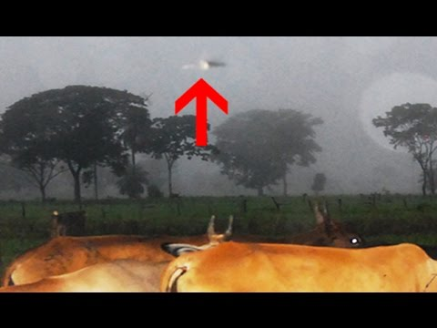 UFO Stalking Cows On A Farm? Venezuelan UFO MYSTERY Cases Uncovered