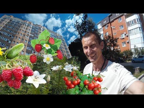 Огород в городе у дома. Живые примеры. Строить дом или купить квартиру. Переезд в Краснодар ПМЖ