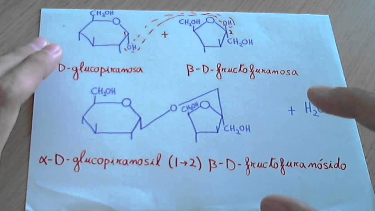 que es sacarosa en quimica