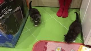 Котики 4 нед. Сыктывкар