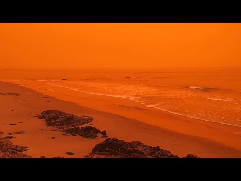 WTF Moments Captured By Surfline Cams