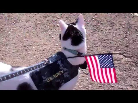 Patriotic Cat Kal Honors American Veterans & American Flag Tribute video: On Guard for America