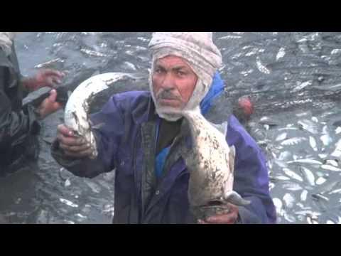 بالفيديو كامل :- مزرعة برسيق تحقق اكبر انتاجية فى اليوم الثالث من الصيد