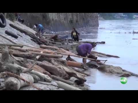 Collecting Woods and Bamboos from Irrawaddy River