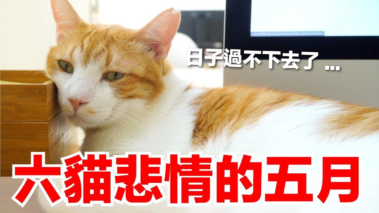 【六貓日記EP1】本丸與蛋捲的悲劇五月,為什麼人都不見了?|2021五月號