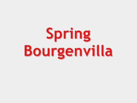 Spring - Bourgenvilla Original
