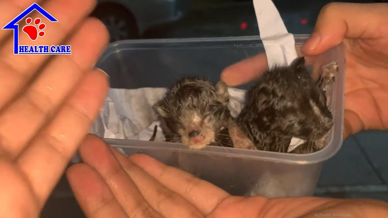 Rescue 2 orphaned baby kittens in big raining storm