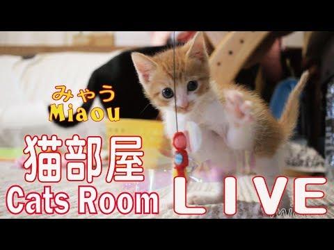 猫ハウス 第2室 【猫部屋ライブ みゃう】 Cats House 2 Live  Miaou