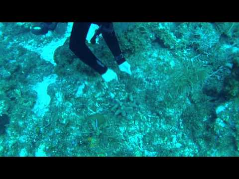 "Scuba Diving ""La Mesa"" in Grand Cayman"