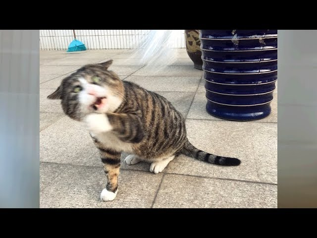 FUNNY ANIMAL MOMENTS youll NEVER FORGET! LAUGH NOW!