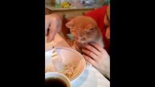 Прикол! Кот ест макароны!!!