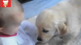 Дети и животные ● Приколы с животными весна 2016 ● Dogs & Cute Babies Compilation
