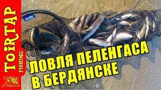 Рыбалка на пеленгаса Ловля пеленгаса в Бердянске