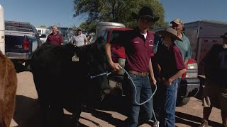Students raise heifers for college scholarships