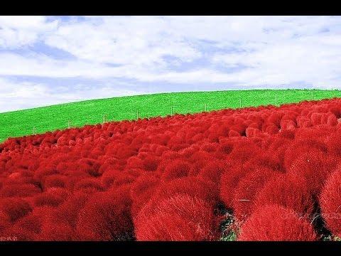 Купить лекарственные травы и корни -