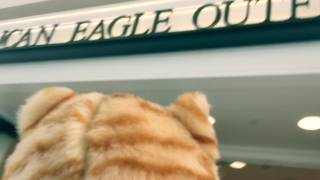 Don Gato goes to the mall!