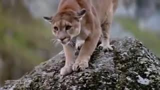 Most Amazing Wild Animals Attacks TOP 10 Eagle attacks