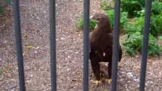 Я познаю Пермь: экскурсия в Пермский зоопарк!