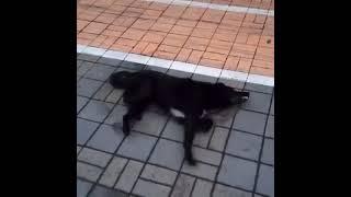 Видео травли собак в Адлере Уберите детей от экранов