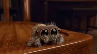 Lucas the spider meme