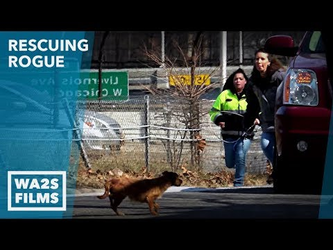 As Stray Dog Runs Toward Freeway Rescuers Did Something Crazy To Save Her Life! Ep 27 Rescuing Rogue