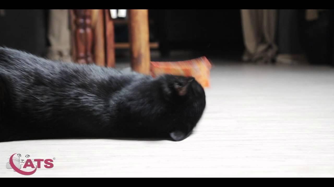 zdarma sólo dospívající kočička