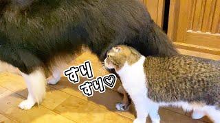 🐈犬の親友との再会が嬉しくてスリスリしちゃった猫