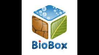 Голландский аквариум в BioBox. Секреты создания травника.