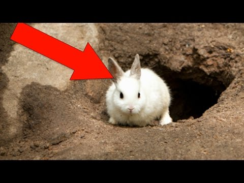 Thumbnail: You'll Never Believe Where This Rabbit Hole Leads To (Not Wonderland)