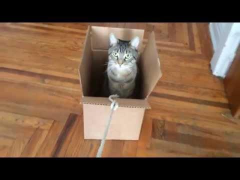 Indoor Cat Sledding
