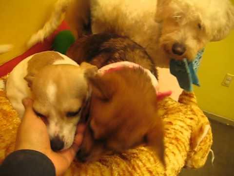 the pet care center ram bo pumpkin coffee sparky   youtube