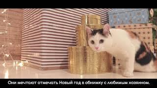 Трогательная  новогодняя социальная реклама про бездомных животных