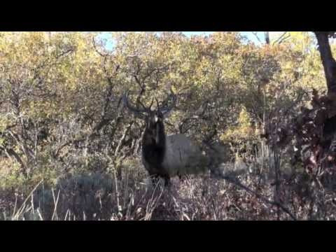 Biggerstaff Guides And Outfitters Video