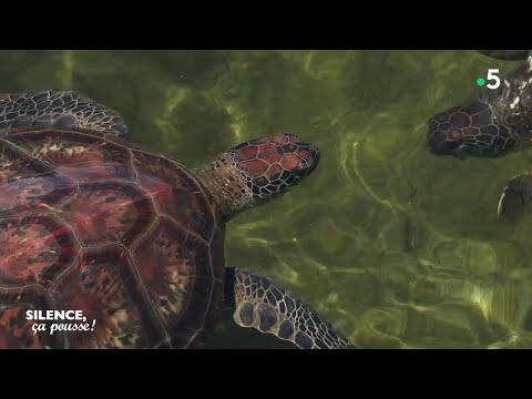 Découverte : les tortues et les plantes de la Réunion
