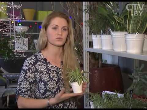 Растения, которые лучше всего очищают воздух в квартире