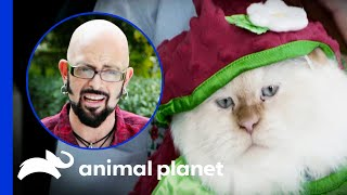 Owner Refuses To Stop Dressing Up Her Cats | My Cat From Hell