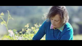 The Reserve 2014 Cabernet Sauvignon - To Kalon Vineyard