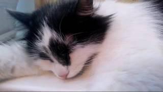 Утро. Кошка Мура.