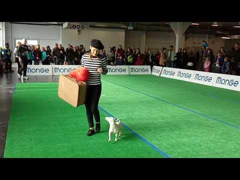 Dog Show Italy - Amazing Dog Performance - Bhola Shola