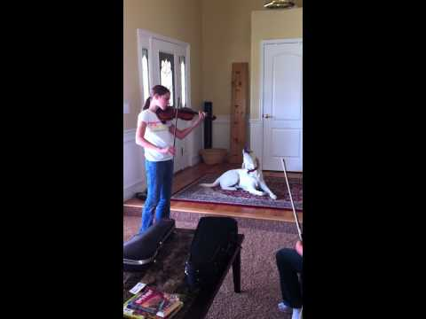 Drake the Singing Dog  with Kaitlyn on violin 9-26-12 002.MOV