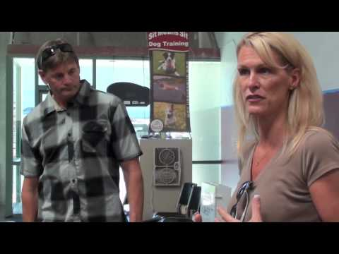 Chesapeake Bay Retriever - Dog Training Problems  (Episode 1)