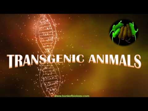 Biotechnology - Applications Part 3 - Transgenic Animals, Ethical Issues