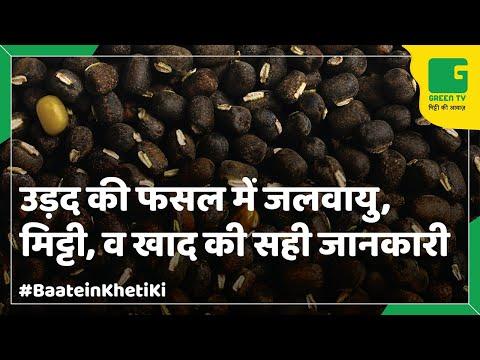 Black Gram Farming (उड़द की खेती ) In Baatein Kheti Ki - On GreenTV