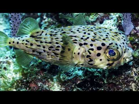 Underwater Photography Diving the North Coast of Cuba, Dec 2017