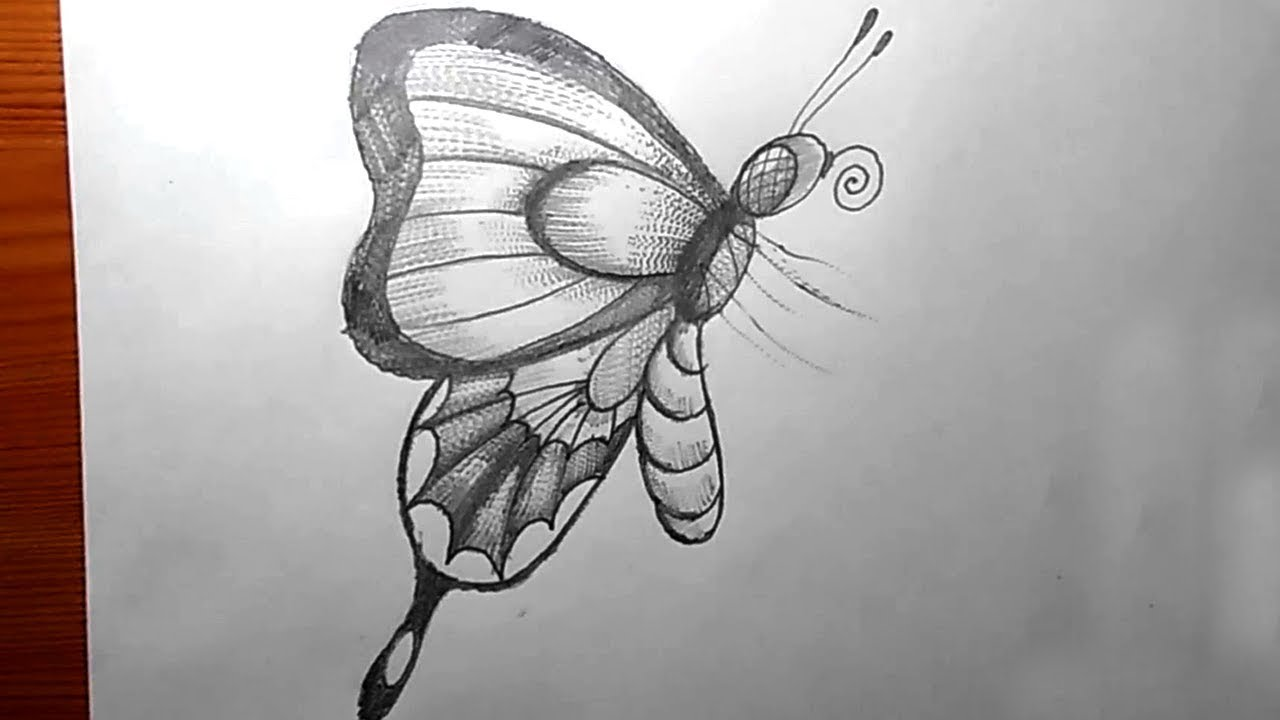How to draw a butterfly pencil drawing yzarts