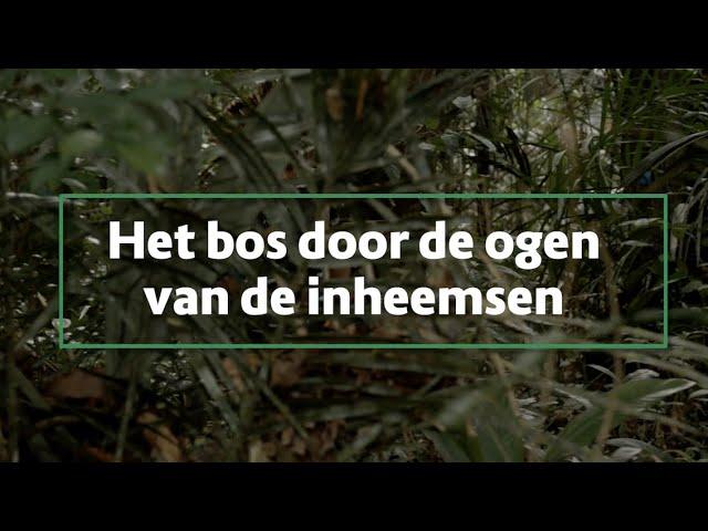 Busi Taki: het bos door de ogen van inheemsen in Zuid Suriname