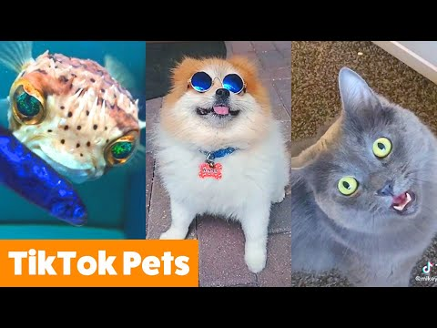 Silly TikTok Pets That Will Make You Laugh | Funny Pet Videos