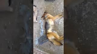 INTERWENCJA: martwe psy w pod sokólskiej hodowli/Fundacja Pomocy Zwierzętom VITA CANIS